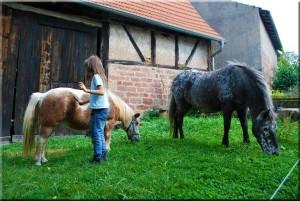 kastanienfof-kraemer-urlaub-auf-dem-bauernhof_odenwald-waldbrunn_pferde-ponys